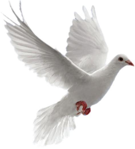 imagenes de luto con palomas 174 gifs y fondos paz enla tormenta 174 im 193 genes de palomas