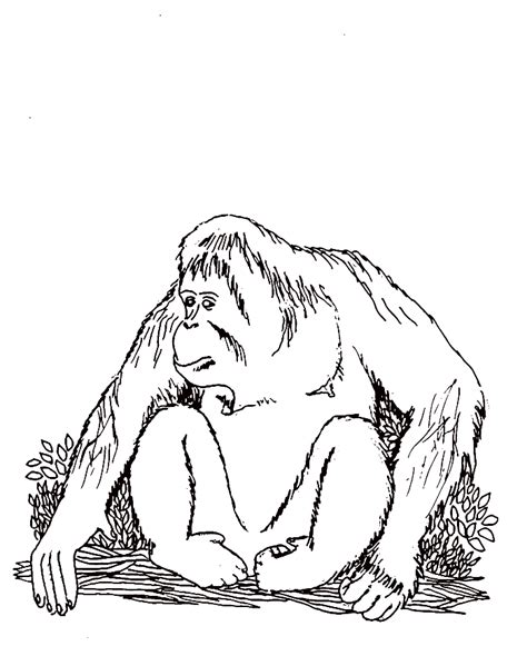 Orangutan Coloring Pages orangutan coloring pages coloring home