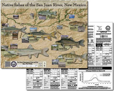 and fish nm new mexico fish new mexico department of fish