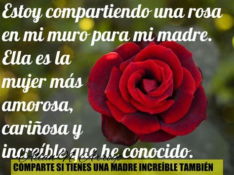 imagenes de rosas para una madre estoy compartiendo una rosa en mi muro para mi madre ella