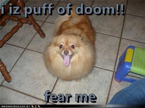 funniest dogs pics teddybear64 photo 16714984 fanpop