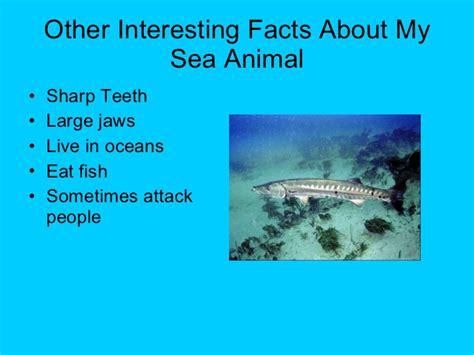 Sea Animal 2 by Mrs Carlin Grade 2 Sea Animals