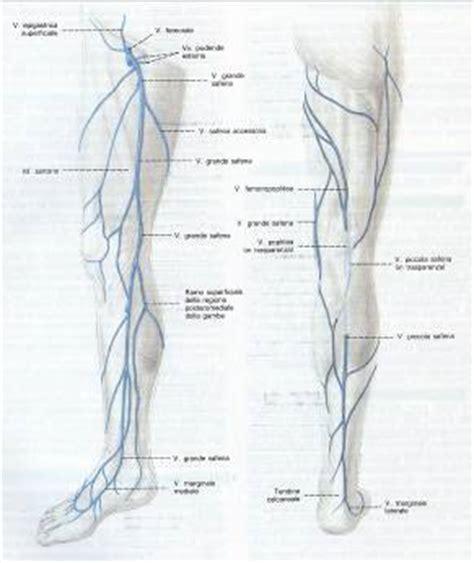 vasi linfatici gambe vena femorale