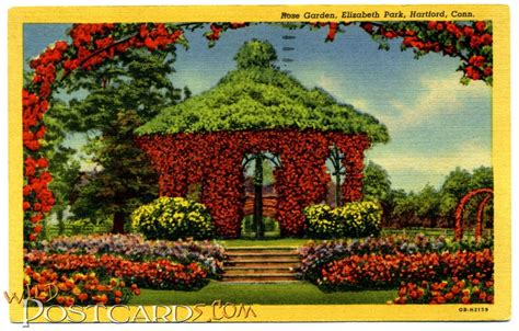 rose garden elizabeth park hartford conn wild postcards
