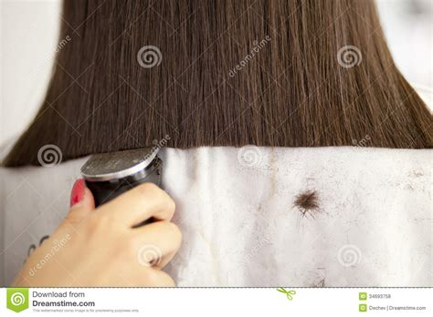 how to clipper cut women hair woman having a haircut royalty free stock photos image