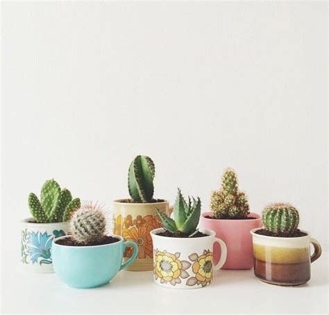 Succulents In Bathroom by Selection Of Splendid 29 Cacti In Diy Flower Pots Homesthetics Inspiring Ideas For Your Home