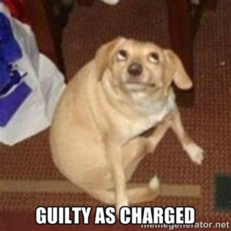 guilty dog meme generator image memes at relatably com