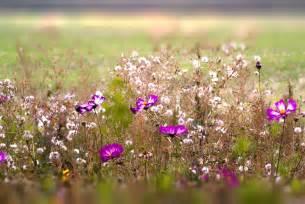 photo gratuite fleurs des chs fleurs image gratuite