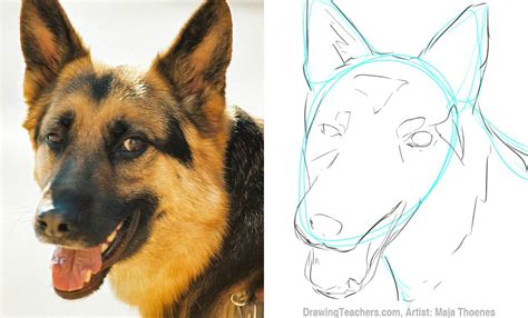 how to draw a german shepherd puppy http animalvista wp content uploads 2012 06 how to draw a jpg