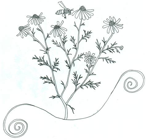herb garden coloring pages flower with roots coloring page printable coloring pages
