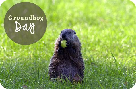 groundhog day will come groundhog day treasure in jars of clay
