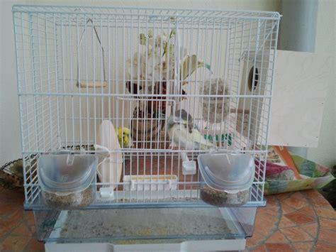 gabbia cocorita gabbia per 3 cocorite cocorite e pappagallini ondulati