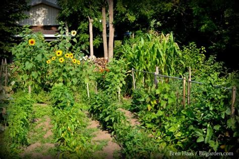 How To Plan A Vegetable Crop Rotation Hgtv Types Of Vegetable Gardening