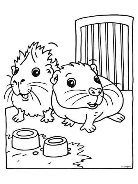guinea pig coloring pages free printable guinea pig coloring pages coloringpages1001 com