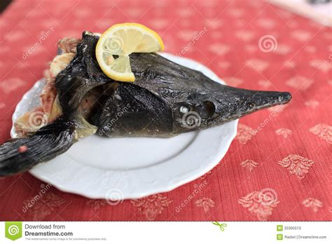 plats in head gallery head of sturgeon on plate stock photos image 25305513