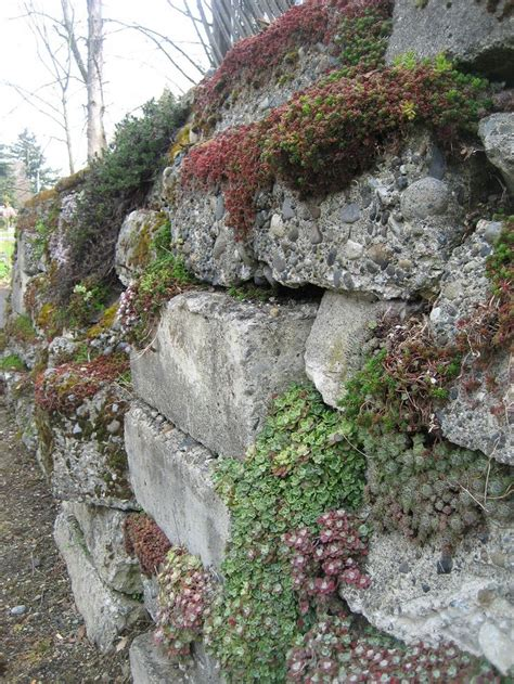 Garden Wall Materials 17 Best Images About Rock Gardens Alpines On