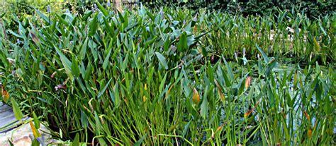 winterharte gräser garten filtergraben gartenteich typen