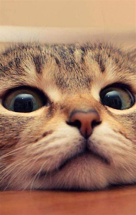 imagenes tumblr gatitos descargar fotos de gatitos tiernos al celular im 225 genes