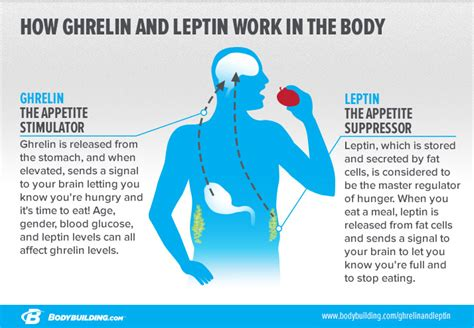 how does the leptin rx work living an optimized life how to turn off and regulate your hunger hormones for good