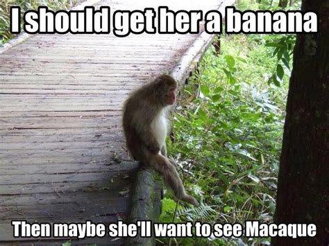monkey pictures with captions 30 animal captions part 20 30 pics amazing