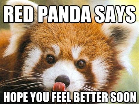 Red Panda Meme - red panda says hope you feel better soon red panda