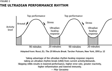 Ultradian Rhythm Psychology Essay by All About Ultradian Rhythms Pilar Gerasimo