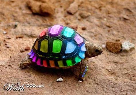 imagenes con muchos colores turtle animal and beautiful
