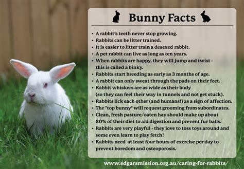 7 Facts On Bunny Rabbits by Ehh What S Up Doc Edgar S Mission Farm Sanctuary