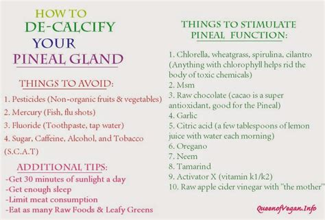Pineal Gland Detox Foods by Foods That Decalcify Pineal Gland The Pineal Gland Diet