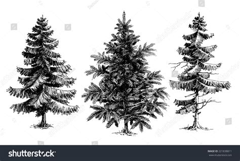 draw realistic christmas trees pine trees trees realistic stock vector 221838811