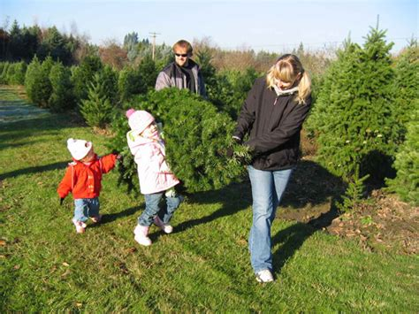 choose and cut christmas tree farms near st louis missouri