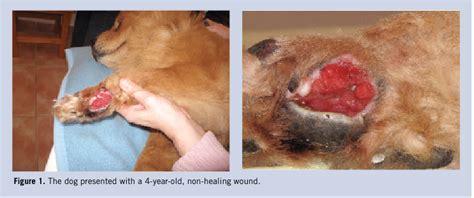 carpal pad paw pad injury myideasbedroom