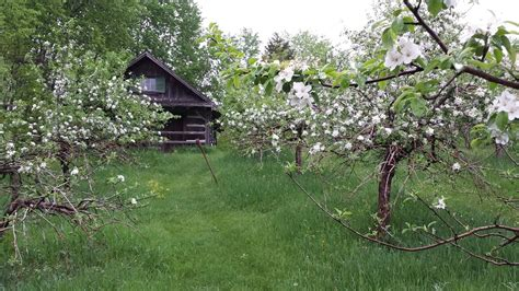 Cabins Orchard by Log Cabin Orchard Localharvest
