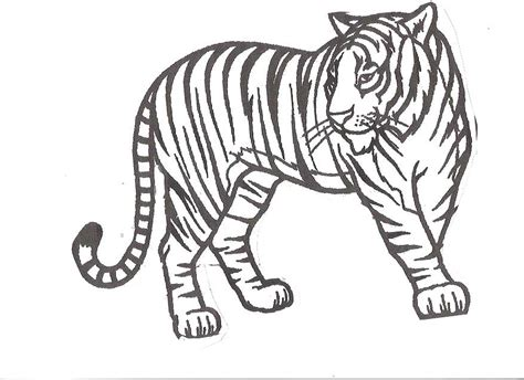 cute tiger coloring pages coloring home