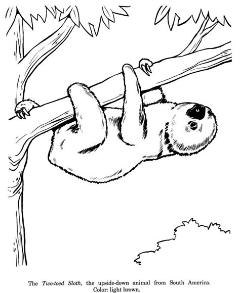 sloth animal coloring pages 187 coloring pages 17 best ideas about two toed sloth on baby
