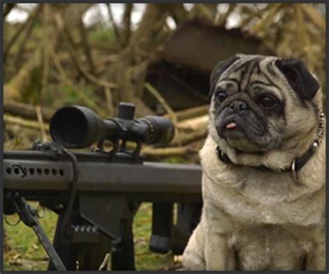 pug gun sniper pug has got your back journal guns firearms rifles shotguns assault weapons