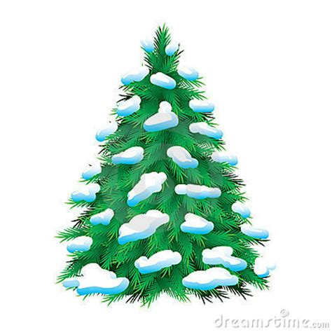 green fur tree covered with snow stock photos image