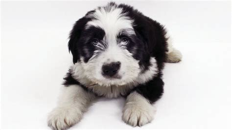 shore puppies national day free puppy adoptions sponsored by gilt am new york