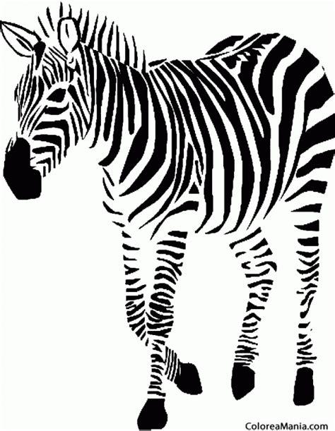imagenes de cebras para dibujar faciles colorear cebra al paso 2 animales de la selva dibujo