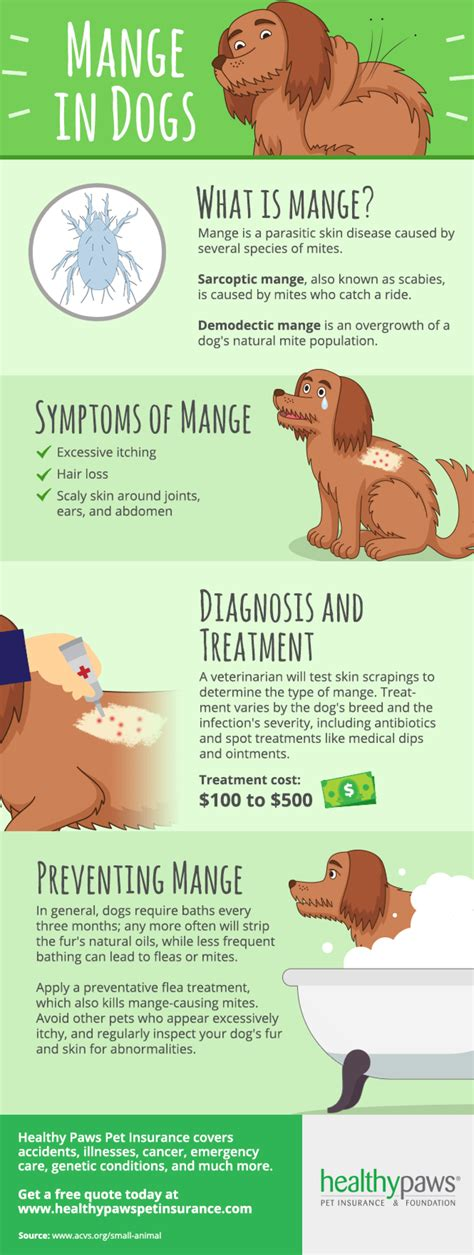 how to treat mange in dogs how to treat mange in dogs healthy paws pet insurance