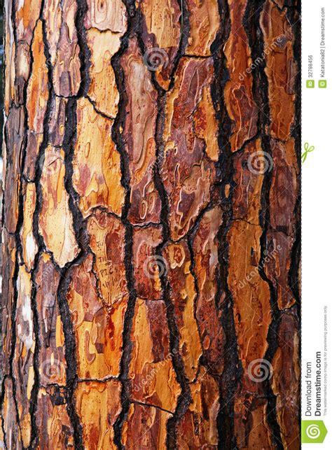 brown tree pics brown bark of pine tree stock photo image of bark