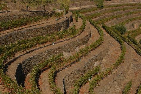 Happy Hour Quinta De Roriz 2004 Vintage Port by The Wines Of Quinta Da Romaneira Douro Portugal