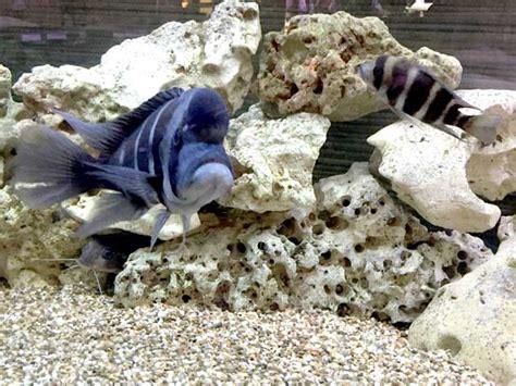 Aquarium Ohne Pflanzen Einrichten 6848 by Ein Aquarium Ohne Pflanzen Ist Dies 252 Berhaupt M 246 Glich