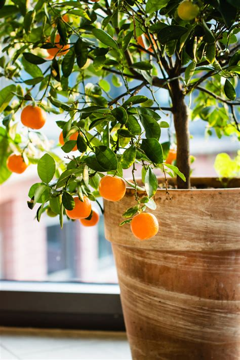 vegetables i can grow indoors 6 fruits and vegetables you can easily grow indoors alternet
