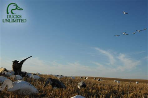 on location with ducks unlimited