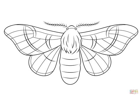 how to color a silkmoth coloring page free printable coloring pages