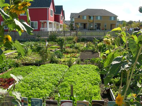 What Is A Community Garden by File High Point Community Garden Jpg Wikimedia Commons