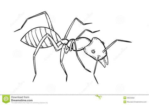 Skizze Der Ameise Vektor Abbildung Bild Von Tier Hand Coloriage La Fraise L