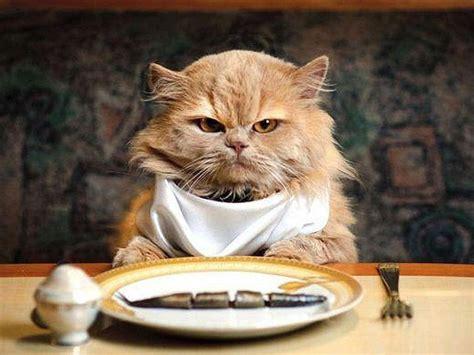 alimentazione naturale gatto dieta barf cos 232 meglio per il vostro gatto innaturale