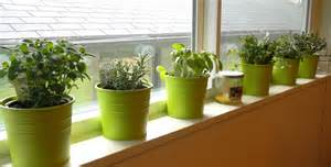 Window Sill Herb Garden Pots Cornwall Capers Windowsill Herbs